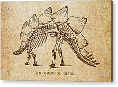 Dinosaur Stegosaurus Ungulatus Acrylic Print by Aged Pixel