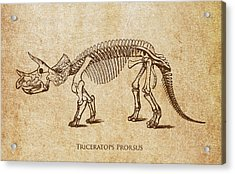 Dinosaur Triceratops Prorsus Acrylic Print by Aged Pixel