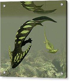 Diplocaulus Prehistoric Amphibian Acrylic Print