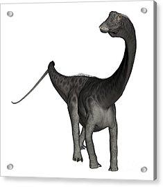 Diplodocus Dinosaur Acrylic Print by Elena Duvernay