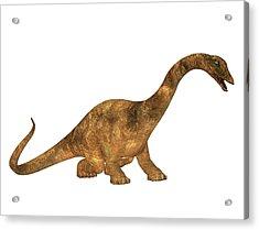 Diplodocus Dinosaur Acrylic Print by Friedrich Saurer