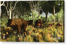 Diprotodon On The Edge Of A Eucalyptus Acrylic Print