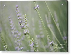 Acrylic Print featuring the photograph Direction .... by Lynn England