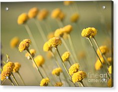 Acrylic Print featuring the photograph Direction In Yellow..... by Lynn England