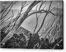 Directions Of The Forest Acrylic Print by Mark Lucey