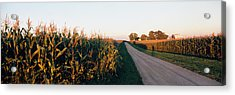 Dirt Road Passing Through Fields Acrylic Print