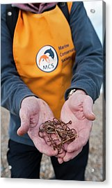 Discarded Fish Hooks Acrylic Print by Matthew Oldfield