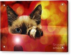 Disco Kitty 1 Acrylic Print