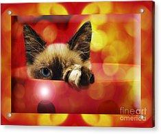 Disco Kitty 2 Acrylic Print