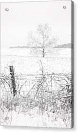 Distant Tree Acrylic Print