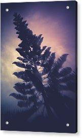 Distorted Pine  Acrylic Print