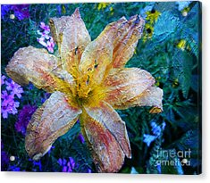 Distressed Lily Acrylic Print
