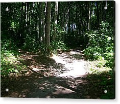 Diverging Path In The Woods Acrylic Print