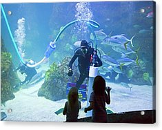 Divers Cleaning Aquarium Tank Acrylic Print by Jim West
