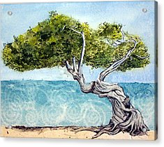 Acrylic Print featuring the painting Divi Divi Tree by Lynn Babineau