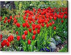 Divine Garden...... Acrylic Print