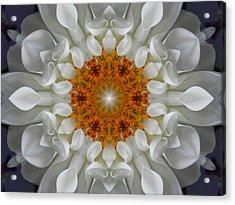 Divine Love Flower Mandala Acrylic Print