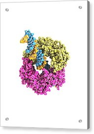 Dna Clamp Acrylic Print by Ramon Andrade 3dciencia
