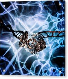 Dna Histone Acrylic Print by Richard Kail