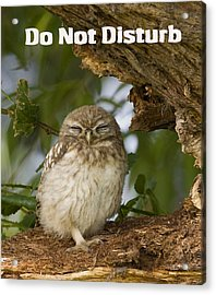 Do Not Disturb Acrylic Print by Paul Scoullar