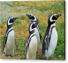 Do You Smell That - Penguins Acrylic Print by DerekTXFactor Creative