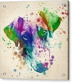 Doberman Splash Acrylic Print by Aged Pixel