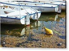 Docked Sailboats Acrylic Print by Pati Photography