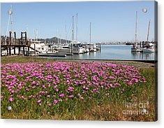 Docks At Sausalito California 5d22695 Acrylic Print by Wingsdomain Art and Photography
