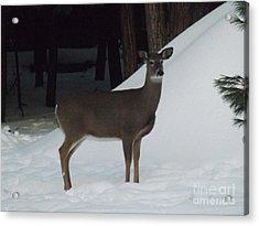 Doe A Deer Acrylic Print by Brenda Brown