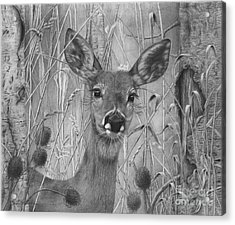 Doe Pretty Acrylic Print