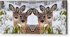 Doe You See Me Acrylic Print by Betsy Knapp