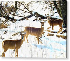 Does In The Snow Acrylic Print