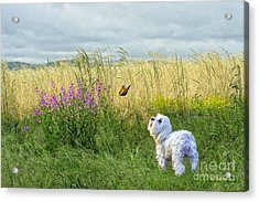 Dog And Butterfly Acrylic Print by Andrea Auletta