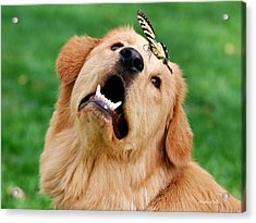 Dog And Butterfly Acrylic Print by Christina Rollo
