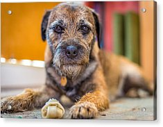 Acrylic Print featuring the photograph Dog And Chew. by Gary Gillette
