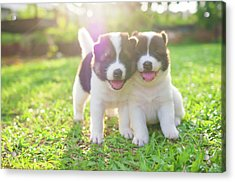 Dog And Puppies Acrylic Print by Primeimages