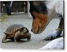 Dog And Turtle Acrylic Print