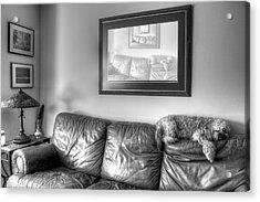 Dog As Art Acrylic Print by JC Findley
