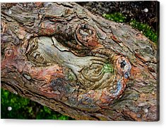 Acrylic Print featuring the photograph Dog Bone In The Bark by Gary Slawsky