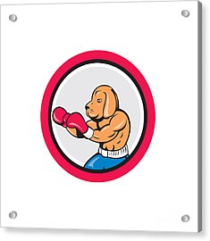 Dog Boxer Boxing Circle Cartoon Acrylic Print by Aloysius Patrimonio