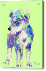 Dog Cute Puppy Acrylic Print by Go Van Kampen
