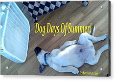 Dog Days Of Summer Acrylic Print