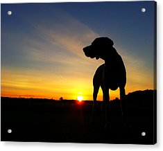 Dog Days Of Summer Acrylic Print by Brook Burling