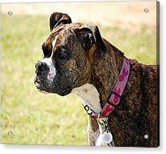 Dog Gone Pink Acrylic Print by AJ  Schibig