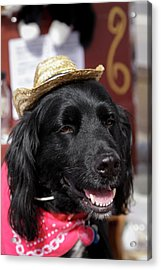 Dog In A Small Town Parade Acrylic Print by Julien Mcroberts