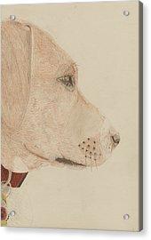 Dog In Profile Acrylic Print