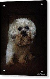 Dog In The Box Acrylic Print