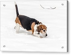 Dog In The Snow Acrylic Print by Wade Brooks