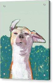 Dog In Wind Acrylic Print