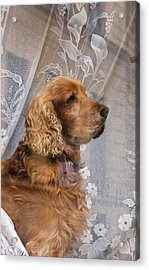 Acrylic Print featuring the photograph Dog In Window by Dennis Cox WorldViews